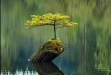 Miraculous nature