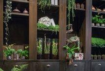 PLONIE ❥ Gardening indoors / by Plonie