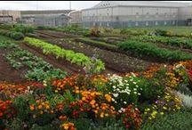 Prison Gardens