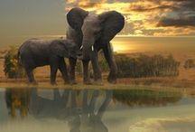 elephants / by Cameryn Shay