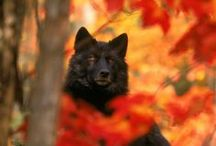 wolves / by Cameryn Shay