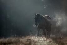 horses / by Cameryn Shay