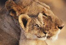 wild cats / by Cameryn Shay