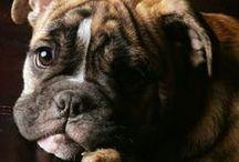 puppy dogs / by Cameryn Shay