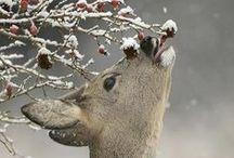 gentle as a deer... / by Cameryn Shay