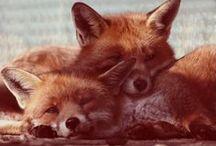 sly as a fox / by Cameryn Shay