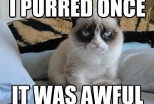 Grumpy Cat / Grumpy cat / by Jessica Wilson
