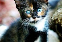 Photos Cats / Cats and Kittens