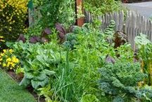 Gardening / Landscaping and gardening tips