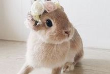 Super Cute Animals / You just have to say 'Aaaawww'!