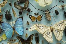 Why I love Entymology! <3 / by Felicia Davis
