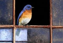 """Birds / """"In the morning I will sing of Your love."""" ~ Psalm 59:16 ~"""