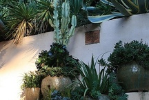 xeriscaping  / pretty un-thirsty plantings / by Robin