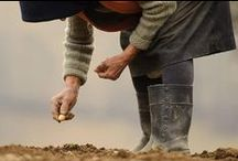 Romanian Rural Life