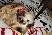 My baby girl Katze ,) <3