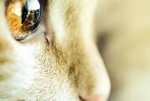 ❤️ Sweet ❤️ / Was gibt es süßeres als Katzenbilder?