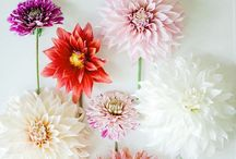 Flowers & Blooms / Beautiful blooms and floral inspiration. Wedding bouquet ideas.