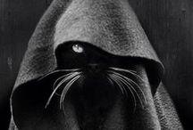 cats / by Katrina Stevenson