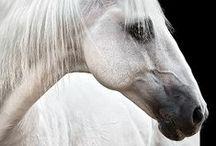 Horses / by Asha ⚔