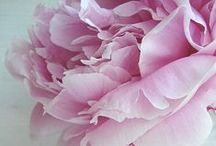 fashion,art,beauty,flowers