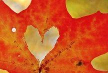fall / by Danielle Burns