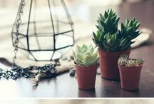 Plants / Plant inspiration, plant diy, plant care tips, species and planters I'm lusting after. If it's related to my little green family, it's here.