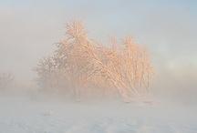 winter / by GrayDayStudio { Abigail }