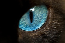A N I M A L I A  / An animal's eyes have the power to speak a great language. ~Martin Buber / by J A M I S E N