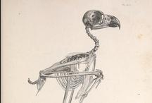 scientific illustrations