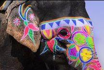 Animaux du monde / Insolites, bariolés, expressifs, ces animaux nous en font voir de toutes les couleurs !