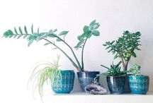 pottery and plants