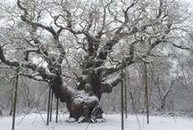 A Very British Winter