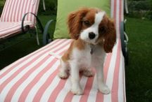 furry friends / cute animals and future pets