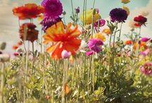 Garden / just dreamin'...