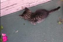 kitties / by Victoria Joyce