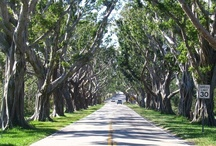 Favorite Places in Florida / We lived in Hobe Sound for many years and worked on Jupiter Island.