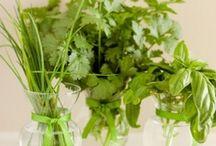 Herbs & Natural Remedies / by Birgit Buchanan