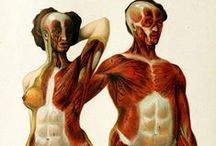 Vintage Anatomy / From 1900 to...