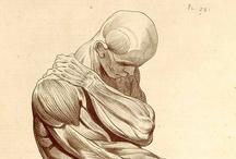 XVIIIth Anatomy