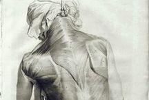 XVIIth Anatomy