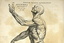 XVIth Anatomy
