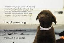 Animal <3 / I love all animals small, big & in between.