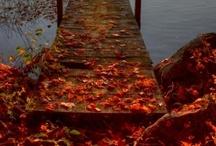 ╰☆╮ Autumn ╰☆╮