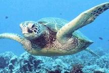 ╰☆╮ Turtles ╰☆╮