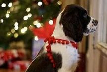 Christmas Pups / Be inspired with some of these cute Christmas and holiday-inspired dog treats, toys and gifts