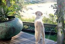 Life with Dogs / General articles about life with our furry friends from the pages of Dogs Life magazine!