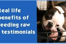 Pet Care / Raw Dog Food transforms Chihuahua in less than 4 months / by Bev Boyden-Van Staden
