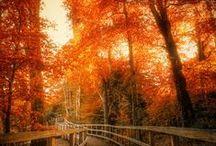 Ahhh fall...