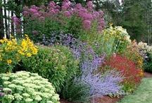 Garden stuff and more garden stuff / by Daniah Tanori