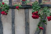 Gardening on Buildings / by Sam Pryor